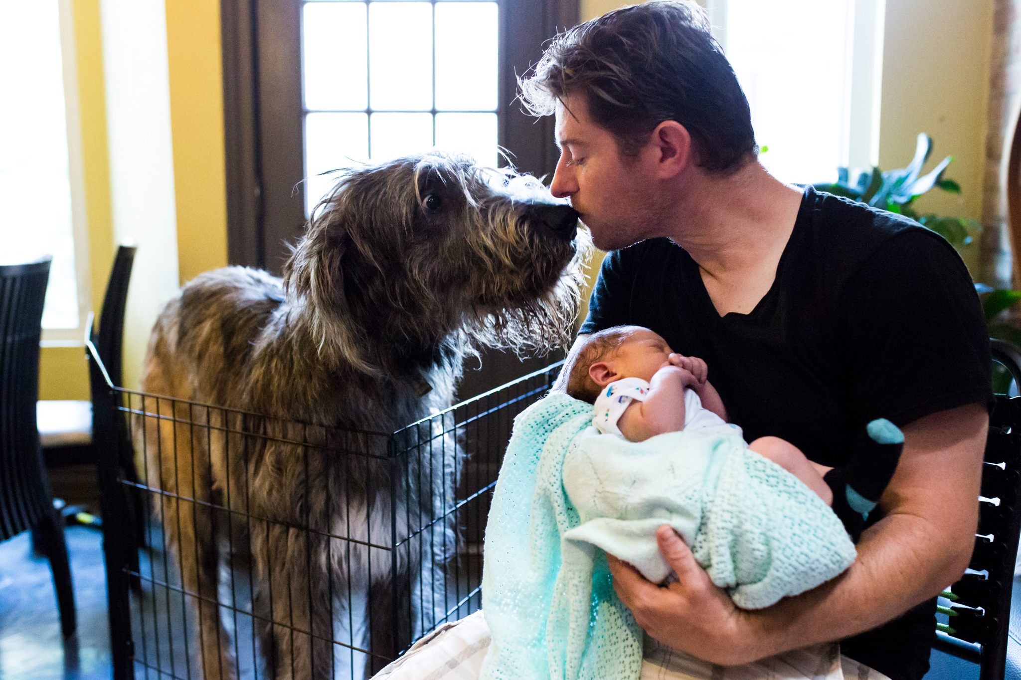Newborn Photographer Lawren Rose Photography takes a quick photo of a father holding his newborn son right next to their irish wolfhound who's giving dad a kiss